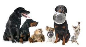 Hundefutter, aber welches ist das richtige?