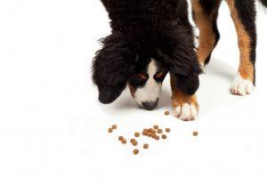 Trockenfutter für Hunde, nicht immer ist drin was drauf steht.